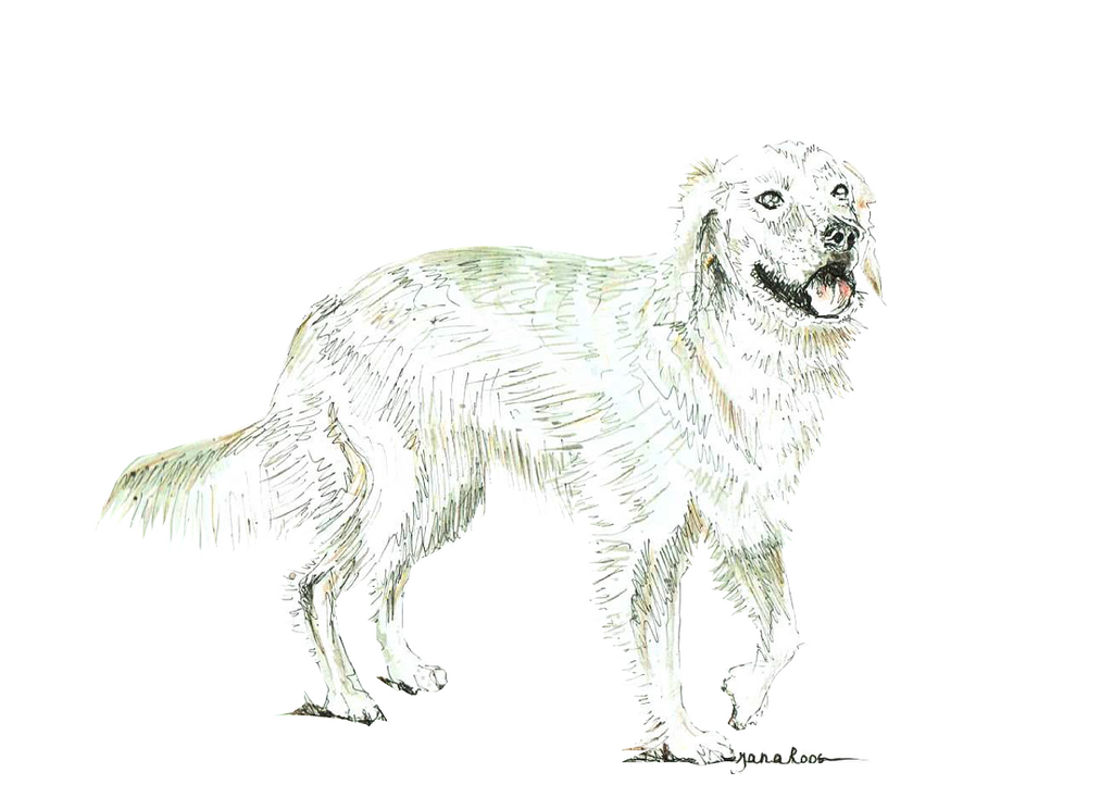 JanaRoos-illustration-dogs-Goldenretriever