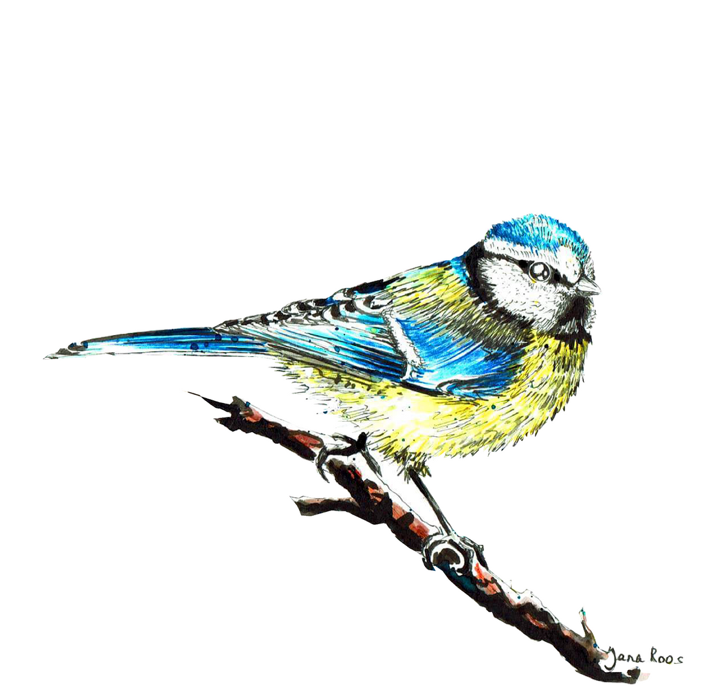 JanaRoos-illustrations-all kinds of birds-pimpelmees-tomtit