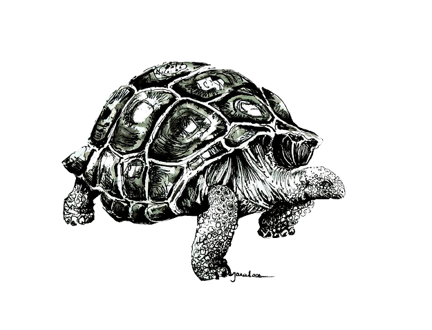 JanaRoos- Illustration - Black & white - Tortoise