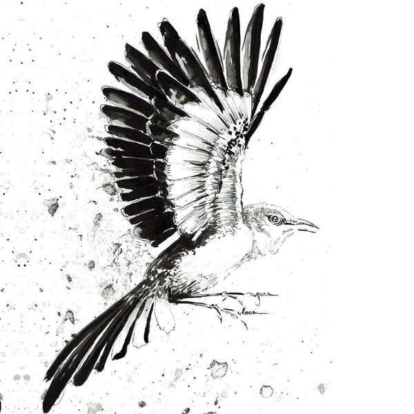 JanaRoos- illustration - Black&white - spotlijster -mockingbird