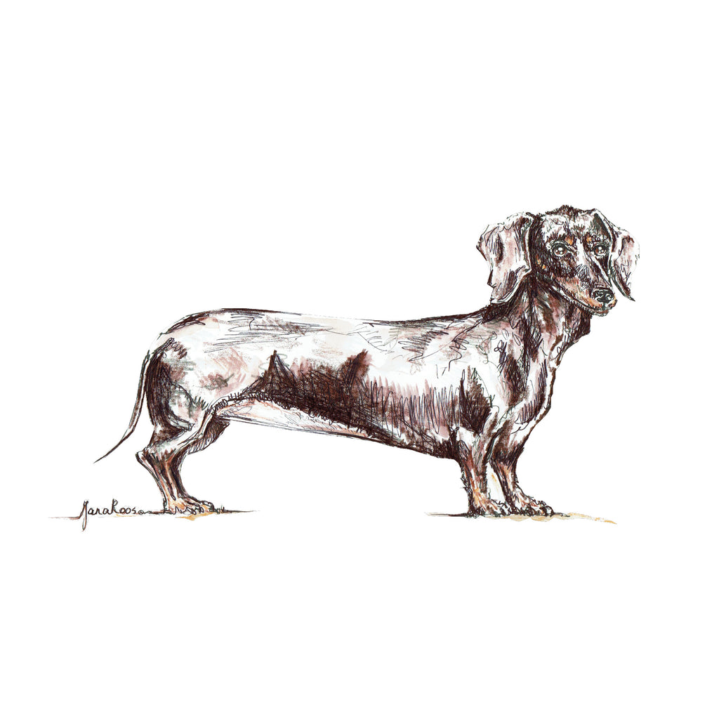 JanaRoos-illustration-dogs-teckel