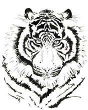 JanaRoos - Jana Roos - Hand drawn illustration - Print - Design - White tiger - witte tijger