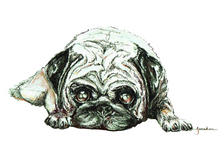 JanaRoos - Jana Roos - Hand drawn illustration - Print - Design -  Pugg - Mops - Dog - hond