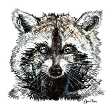 JanaRoos - Jana Roos - Hand drawn illustration - Print - Design -  raccoon - wasbeer - wasbeertje