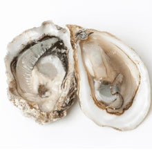 Oysters XO: Chef's Choice Local To You Oysters