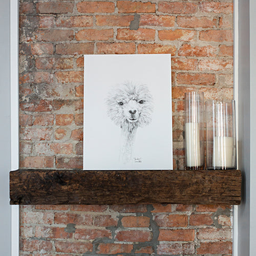 K Llamas Fine Art: 'Jordan' Llama Canvas - SB Shop