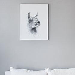 K Llamas Fine Art: 'India' Llama Canvas - SB Shop