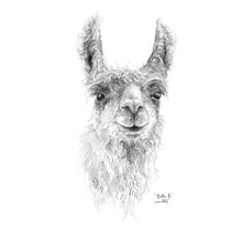 "K Llamas Fine Art: 'Billie Joe"" Llama Paper Print - SB Shop"