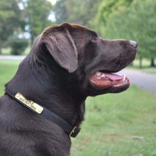 Bluegrass Provisions Co.: Personalized Large Dog Collar
