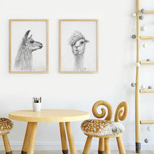 K Llamas Fine Art: 'Ken' Llama Canvas - SB Shop