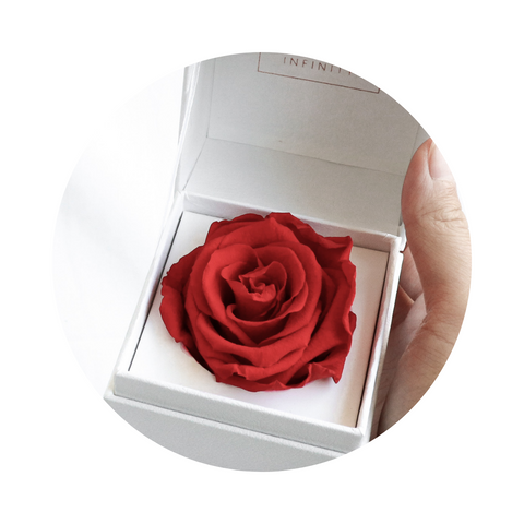 Infnity Flowerbox Single Rose Vibrant Red Rot weiß