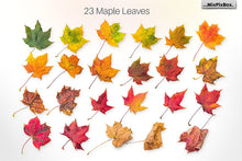 Autumn Leaves Creator Kit