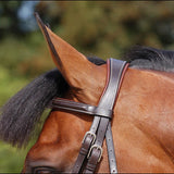 Dy'on Classic Flash Noseband Bridle - Full - New!