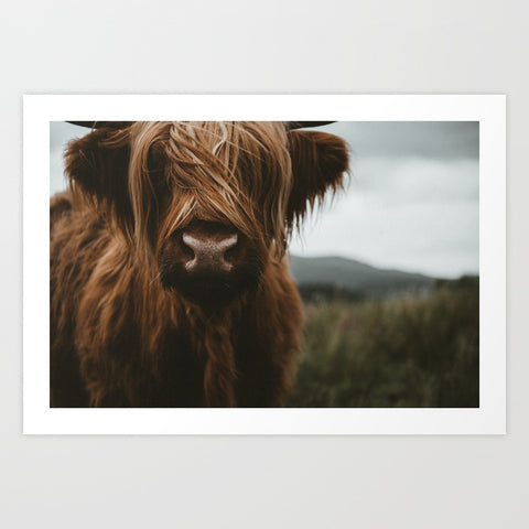 Scottish Highland Cattle - F. W. Woolworth Co. Online Store