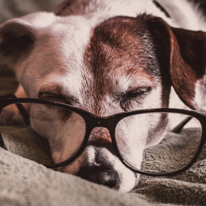 10 of the Smartest Breeds of Dogs