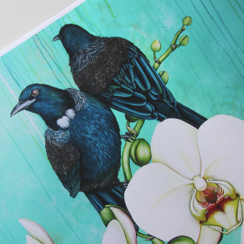 Pair Tui on Orchid