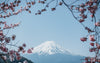 The Travel Bottle - Mount Fuji Japan 1600x1000