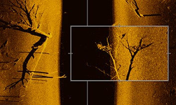 side imaging scan of a fallen tree on the riverbed