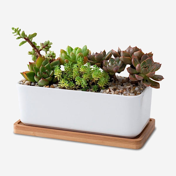 Ceramic Planter with Bamboo Tray 2-Piece   Oblong Garden Bonsai Pots Flower Pot Decoration Trend