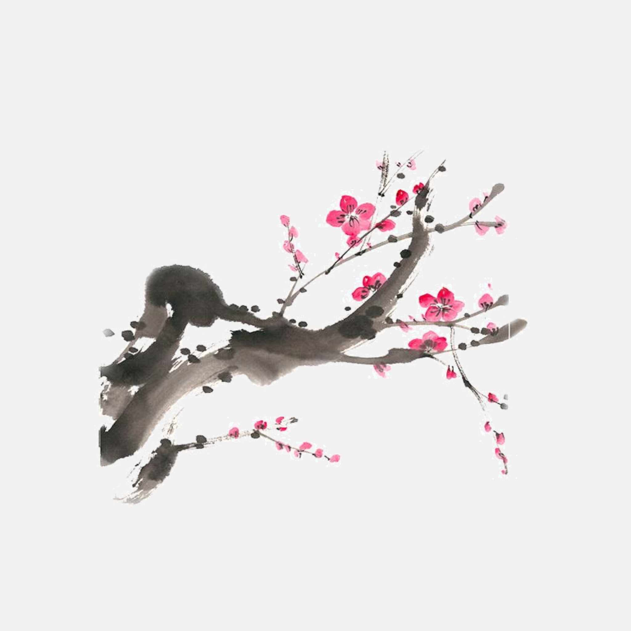 Japanese Plum Cherry Blossom Branch Sticker Trend