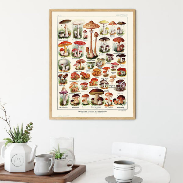 Vintage Botanical Illustration Mushroom Chart Poster Print Mycology Wall Art Canvas Cream Painting Pictures Cottage Kitchen Home Decor Trend