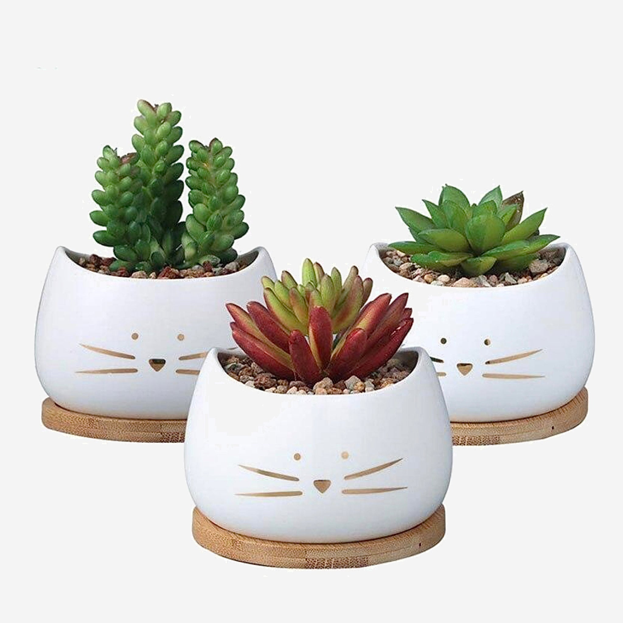 Cute Cat Face Planter Creative White Ceramic Succulent Flower Pot with Bamboo Tray Gardening Pots Trend