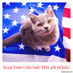 How To Keep Your Cats Safe This 4th of July