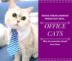 Office Cats Reduce Stress & Help With Productivity