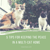 5 Tips For Keeping The Peace In A Multi-Cat Household