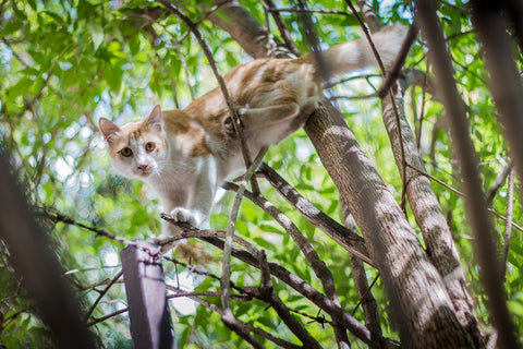 Scared Cat In Tree - Keep your cat safe