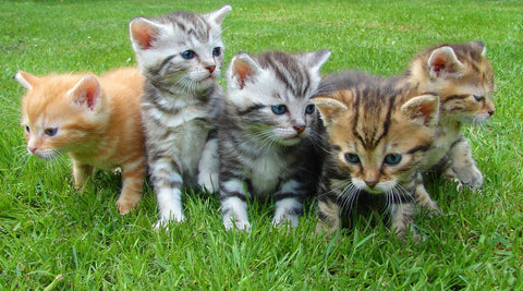 Kittens Outside