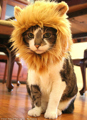 Lion Mane For Cats