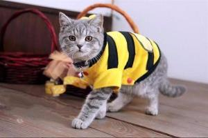 Bumble Bee Costume For Cats - Catari Cats