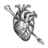 Bonearrow anatomical heart drawing logo