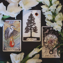The wild unknown tarot new moon in Leo Air signs