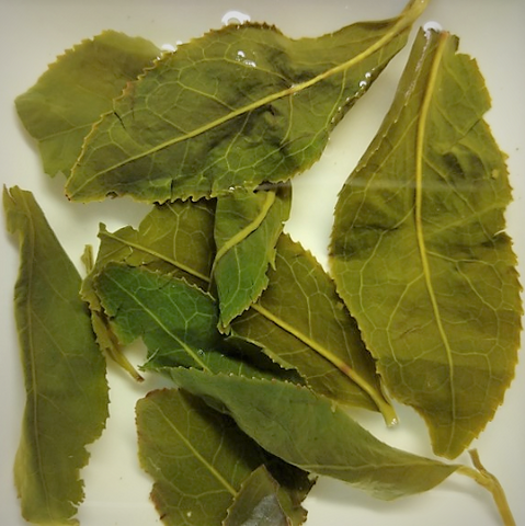 wet_leaves_lishan_cuifeng_high_mountain_oolong_tea_daurim (3)