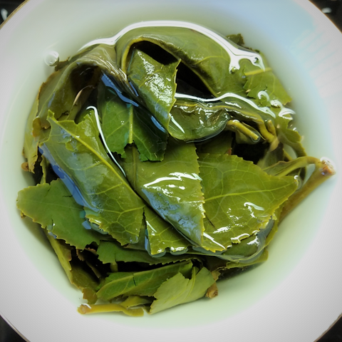 wet_leaves_lishan_cuifeng_high_mountain_oolong_tea_daurim