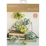 Lia Griffith Paper Stack 8.5 inch X11 inch 24 pack Airplants