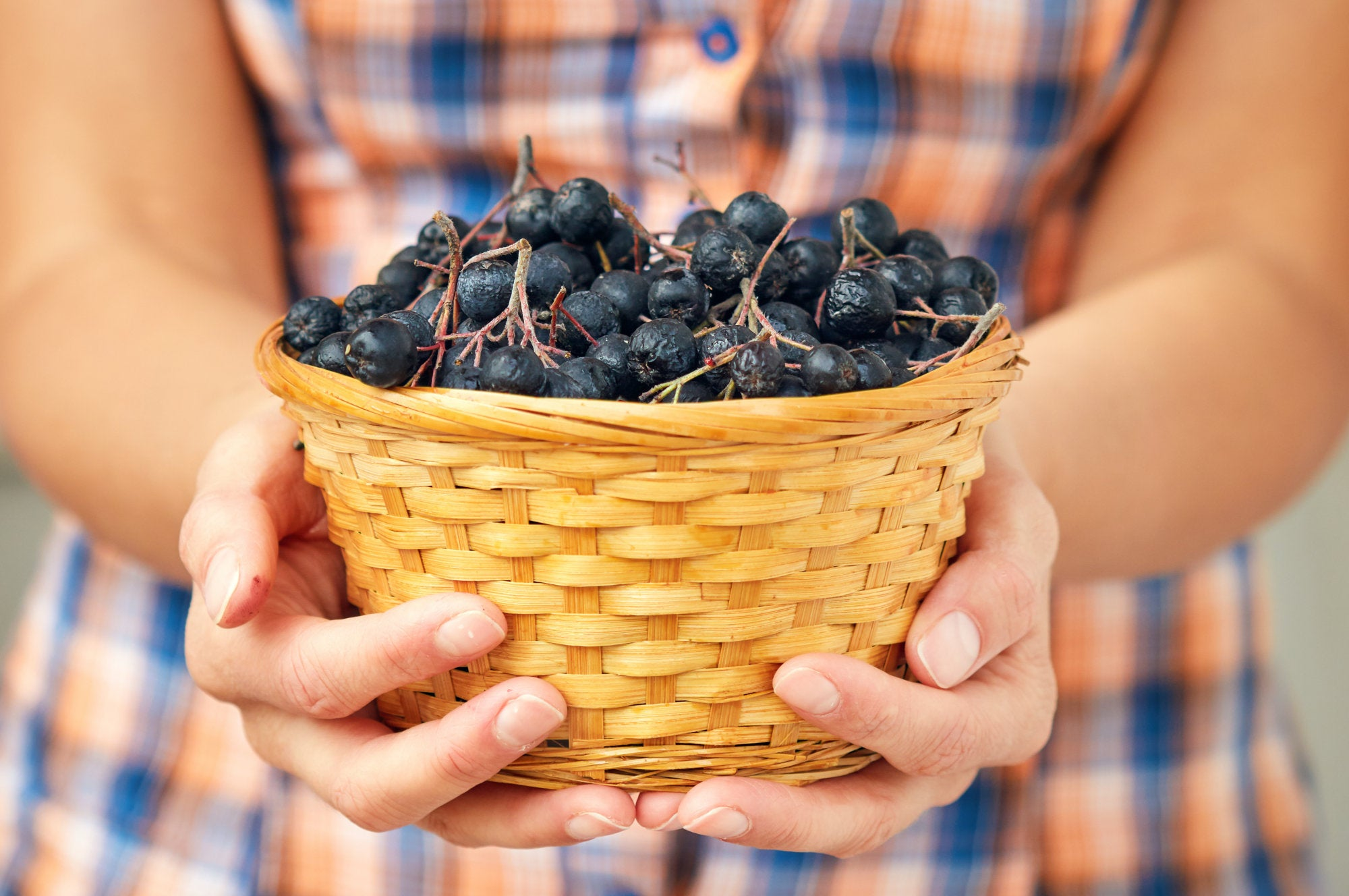 Recognition of Siberian Aronia as a source of health