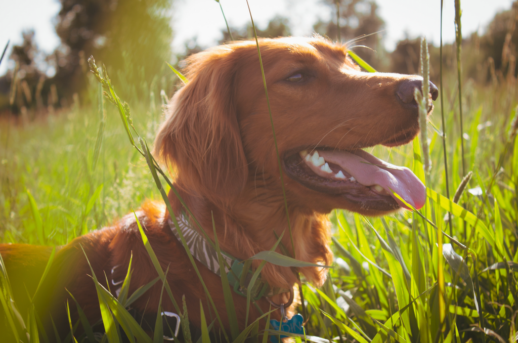 Herbs and Spices that are Good for Dogs