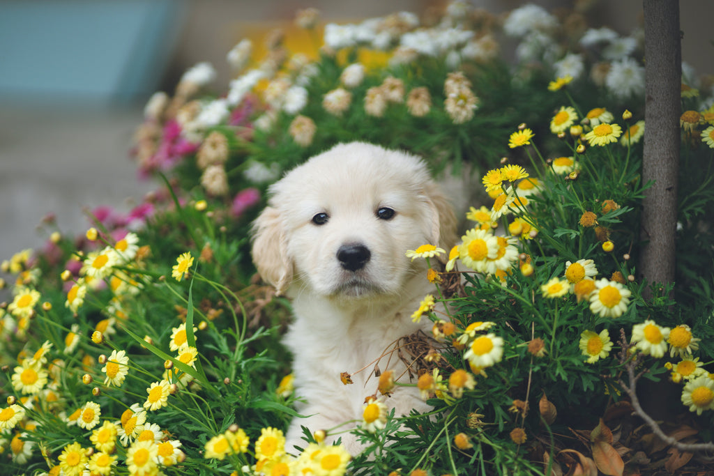 8 Pretty Flowers That are Toxic to Pets