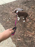 Bainbridge Dog Lead