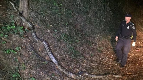 Queensland police python photo gains internet fame
