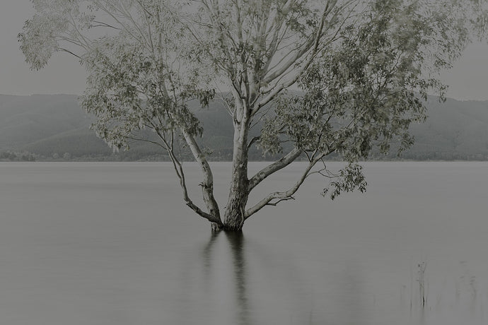 Submerged Tree. Snowy Mountains. PSP-0170