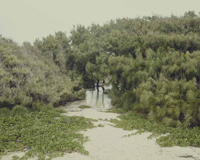 Beach Flood. Barbados. PSP-0316