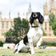 ParliPets Portcullis Dog Collar image 5
