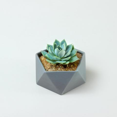 Flat, grey Icosahedron pot