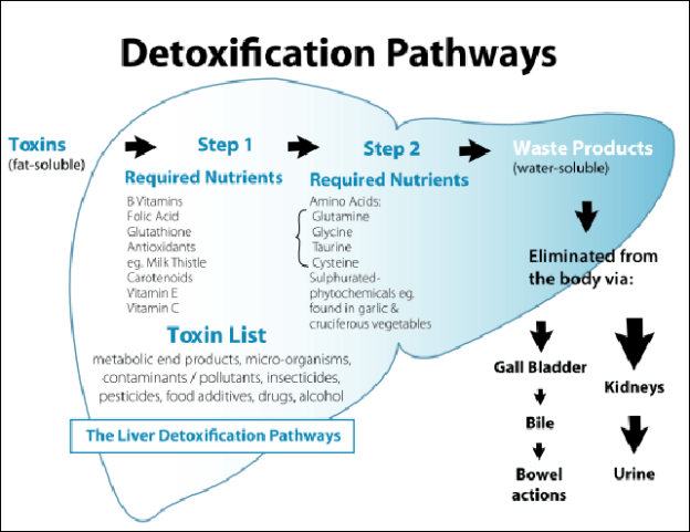 The detox phases