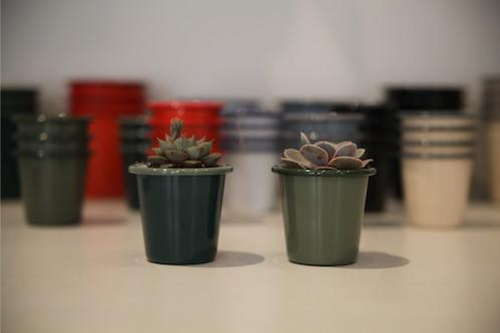 How to... plant Cacti Falcon Planters.
