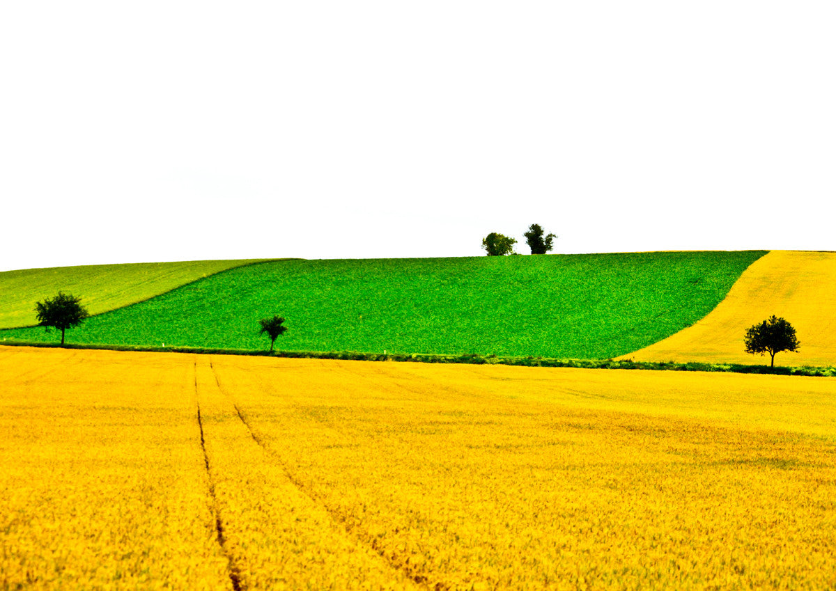 Yellow and Green Fields